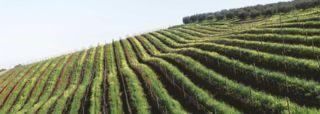 KEDGE Wine School : 5 formations - KEDGE